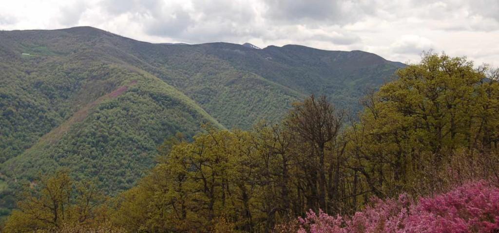 Gestión Forestal Sostenible en Montes de León